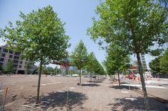 """The Klyde Warren Park Opens: Ten Events We're Looking Forward to This Weekend"" via dallasobserver.com"