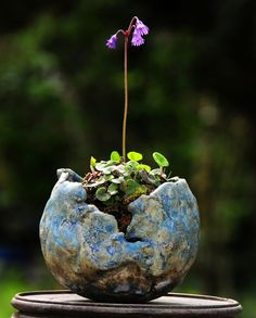 Need some low maintenance garden design ideas? Moss Garden, Bonsai Garden, Garden Art, Ficus Bonsai, Arrangements Ikebana, Micro Garden, Low Maintenance Garden Design, Decoration Plante, Little Gardens