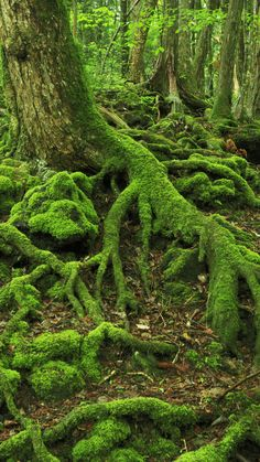 The Suicide Forest, Japan