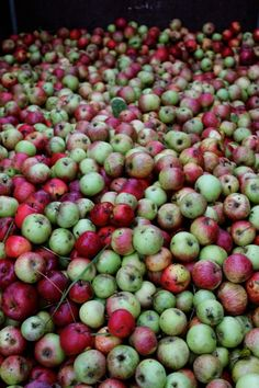 Apple Harvest Beyond Beauty, Apple Harvest, Harvest Season, Apple Recipes, Farm Life, Farmer, Seasons, Autumn, God