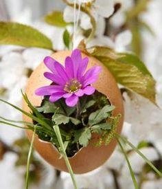 Oster-Dekoration: Frühlingsbeet: Ei in Kresse | LIVING AT HOME