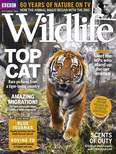 Buy subscriptions and issues of BBC Wildlife Magazine  - September 2017. Available on Desktop PC or Mac and iOS or Android mobile devices.