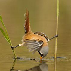Denge, kuş