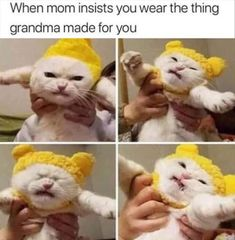 Trendy Ideas Funny Memes Hilarious So True Kitty Humour Geek, Mom Humor, Monday Humor, Cheetahs, Funny Christmas Pictures, Funny Pictures, Christmas Pics, Funniest Pictures, Pictures Images