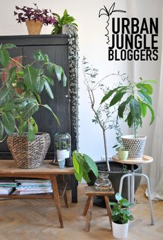 Urban Jungle Bloggers Plantgang