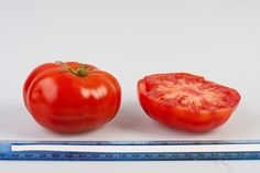Super Marmande tomato, grown at Rutgers NJAES research farms.