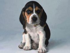 Ebnevelde - Kutyáim