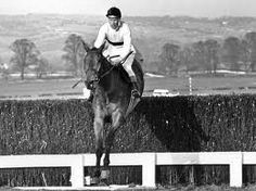 """""""And I leave you with Tomorrow, Saturday, 52 years ago March 1965 - Gold Cup Arkle - Pat Taaffe Fav, Horse Racing Books, Types Of Horses, Sport Of Kings, Gold Cup, Racehorse, Thoroughbred, Equestrian, Pets, Animals"""