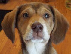 Aww, so freakin' cute! Puppy 15 weeks