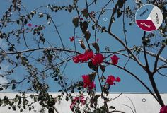 Azul celeste (25) Gris claro (26) Rosa (27)