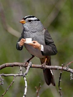 A coffe for Bird https://ssl-ustat.amebame.com/exc/1397355755265/OyESX.JPG