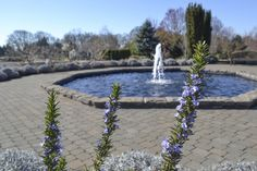 Beautiful, early spring at The Oregon Garden in Silverton, OR  #oregongarden