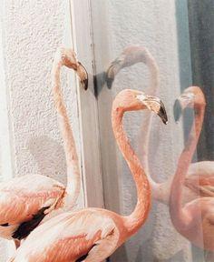 Flamingo ... Salle Privée de Marie