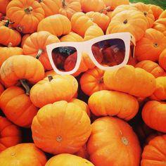 Pumpkin patch fun.
