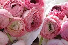 Pink peonies are perfect for every occasion + none at all.