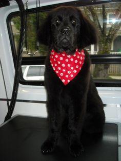 Meet Josie Dog....