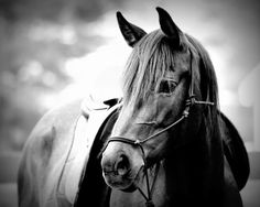 The Forelock