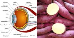 HOW SWEET POTATOES CAN HELP PREVENT BLINDNESS AND HELP YOU LOSE WEIGHT ~ HealthyAeon