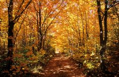 Take a walk in a land of pure imagination in Pure Michigan. Sault Ste. Marie, Michigan, is surrounded with picturesque little side roads that will fill your eyes with color and your heart with wonder.