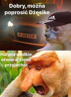 Polish Memes, Death Note, Cool, Best Memes, Fnaf, Haha, Jokes, Wattpad, Facts