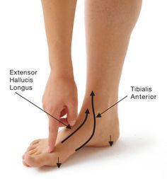 9 Poses to Prevent Bunions & Relieve Bunion Pain   Yoga International