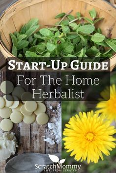 Tools, books, and supplies that are especially helpful for new herbalists! // Scratch Mommy