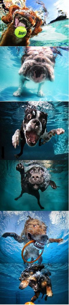 Underwater dogs by Seth Casteel. Best. Book. Ever.