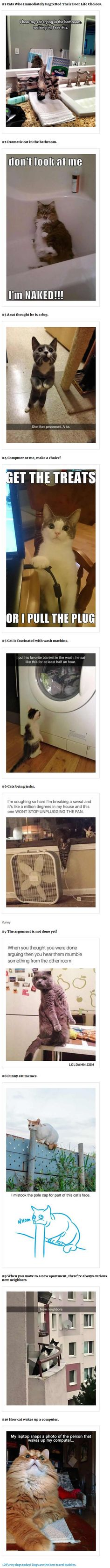 Because, cats...