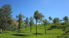 Munnar the famous hill station in kerala