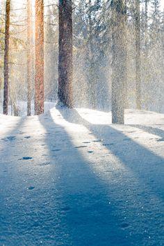 Winter light | Sampo Kiviniemi