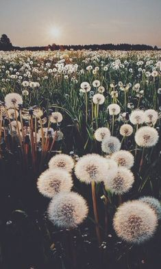 Image uploaded by ELLIE. Find images and videos about nature, flowers and wallpaper on We Heart It - the app to get lost in what you love. Jolie Photo, Pretty Pictures, Spring Pictures, Cute Wallpapers, Aesthetic Wallpapers, Mother Nature, Art Photography, Photography Flowers, Tumblr Photography Hipster