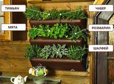 Вертикальный сад, фитомодуль, растения в квартире, цветы в интерьере, растения для дома