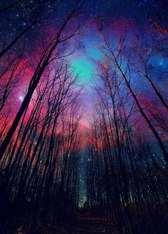 Northern lights. I wanna live in a cabin in the woods at the edge of humanity and see this every night.