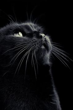 """""""Cats are a mysterious kind of folk.  There is more passing in their minds than we are aware of."""" --Sir Walter Scott"""