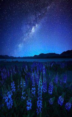 【ニュージーランド】 星の降る村テカポ、世界屈指の美しい星空 まるで宇宙旅行をしているような別世界 - NAVER まとめ