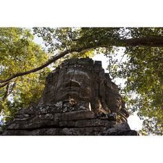 Dori Moreno Photography - Up in the Trees In The Tree, Cambodia, Lion Sculpture, Trees, Statue, Photography, Art, Fotografie, Art Background
