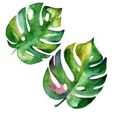 растение монстера рисунки акварелью: 12 тыс изображений найдено в Яндекс.Картинках