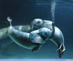 Photoshopped Animal 11 - Photoshopped Animals elephant+seal/sea lion?
