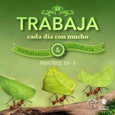 Proverbios 6:6-8 Ve a la hormiga, oh perezoso, Mira sus caminos, y sé sabio; La…