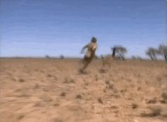 Remember that one time Steve Irwin chased and caught an emu with his bare hands? Steve Irwin is the greatest human being who ever existed.