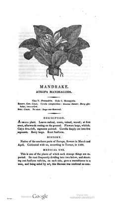 Mandragora, 1810, Robert John Thornton, A New Family Herbal - Or Popular Account of the Natures And Properties of the Various Plants Used In Medicine, Diet And the Arts. London: R. Phillips, 1810. [Mandrake. Atropa Mandragora].