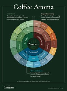 An abridged version of the coffee tasting wheel, where we break down the scent notes a coffee can have, and how they are classified by professional baristas Coffee Aroma, Coffee Barista, Coffee Tasting, Coffee Cafe, Coffee Drinks, Coffee Shop, Coffee Truck, Starbucks Coffee, Coffee Facts