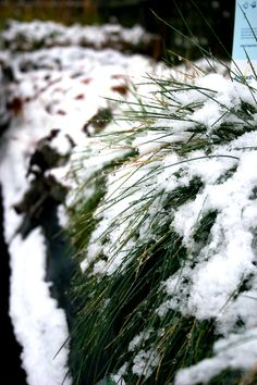 Snow makes everything look pretty in your garden. Plants with striking foliage, berries and flowers are transformed under a layer of white.