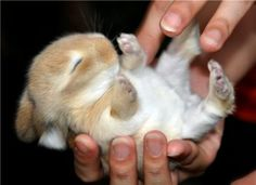 There are a ton of baby rabbits running around in my neighborhood, I so want to catch one and keep it