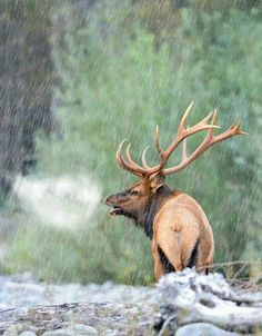 September is coming quick! Whitetail Deer Hunting, Hog Hunting, Big Game Hunting, Trophy Hunting, Dik Dik, Deer Tracks, Big Deer, Deer Family, Photography Pics