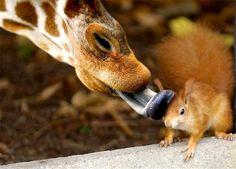 z- Giraffe & Squirrel