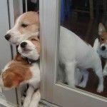 they wanna go play!