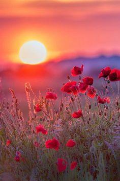 Beautiful sunrise this morning! I love sunrise and sunsets Beautiful World, Beautiful Images, Beautiful Flowers, Landscape Photography, Nature Photography, Sunrise Photography, Beautiful Sunrise, Jolie Photo, Nature Photos