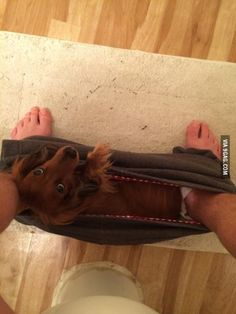 My dachshund sits here every morning while I sit on the toilet...