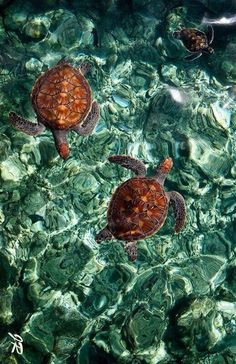 Turtles (hope this isn't photo shopped to achieve the amazing color of the water)